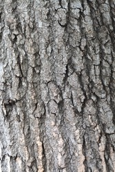 Mottled old tree bark background
