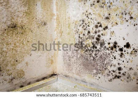 Mould growing in the corner of a room in an old house ストックフォト ©