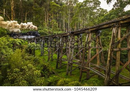 Mount Dandenong fern tree gully native gumtree rainforest steam train wooden railway trestle bridge Melbourne