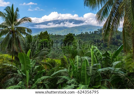 mount Halcon in the clouds,Mindoro island,Philippines
