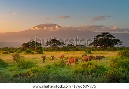 Mount Killimanjaro in Morning light, Amboseli, Kenya Stock photo ©