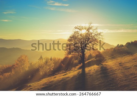 Mountain autumn landscape with colorful forest. Vintage effect