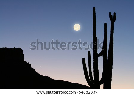 Mountain, Cactus and Moon