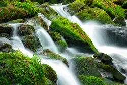 Mountain creek cascade with fresh green moss on the stones, long exposure for soft water look