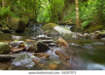 Mountain creek in Killarney National Park