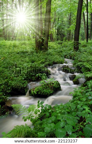 mountain creek in the National Park Tercino valley in the mountains Novohradske-Czech Republic