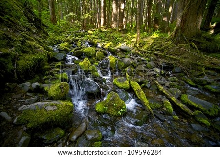 Mountain Creek - Mossy Stones and Stream. Nature Photography Collection. Olympic National Park, WA, U.S.A.