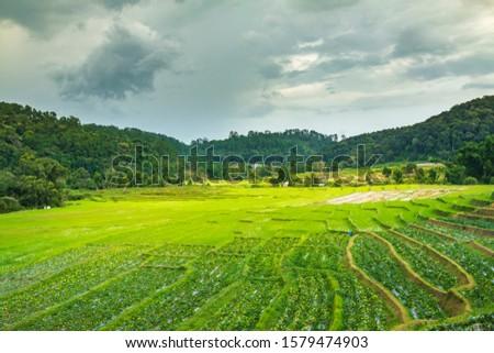 Mountain farmland Rice terraces at Mae Klang Luang, Doi Inthanon, Chiang Mai, Thailand #1579474903
