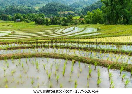 Mountain farmland Rice terraces at Mae Klang Luang, Doi Inthanon, Chiang Mai, Thailand #1579620454