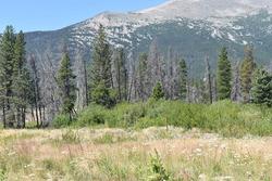 Mountain Field Allenspark Colorado Scenic Byway