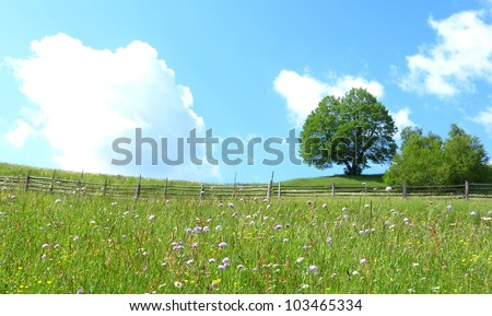 Mountain flower meadow with fence and tree