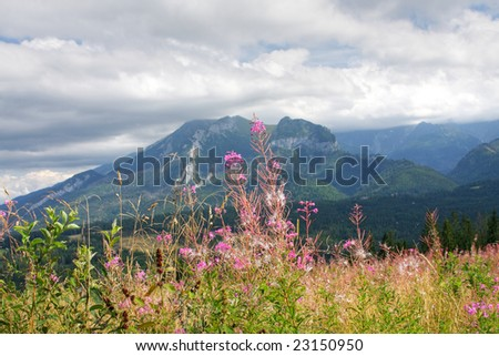 Mountain flowers and plant - stock photo