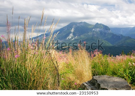 Mountain flowers and plant