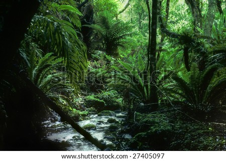 mountain forest at Stewart Island, New Zealand