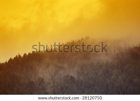 Mountain forest in Austria with clouds