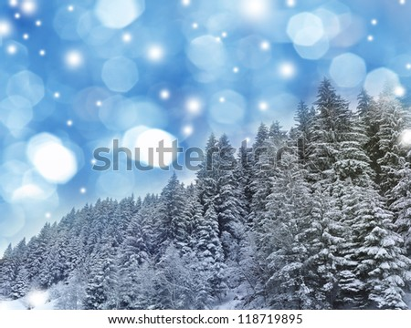 mountain forest in the winter time