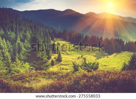 mountain forest landscape under ...