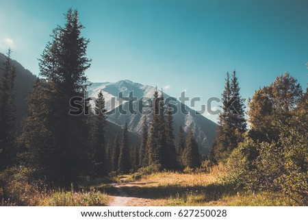 mountain forest landscape. wildlife.