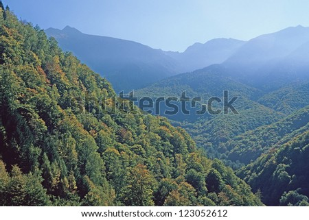 mountain forest, Retezat Mountains, Southern Carpathians, Romania