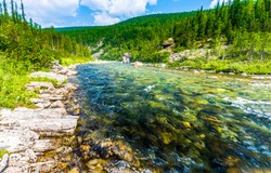 Mountain forest river water view. River flow in mountain forest. River wild in mountains