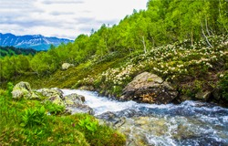 Mountain forest river wild flow. River stream in mountains. Mountain river stream flow. Mountain river creek view