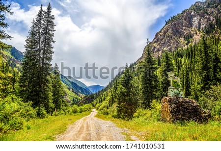 Mountain forest road landscape. Road in mountain frest
