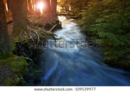 Mountain Forest Scenery with Sunlight Coming In Between Trees. Mountain Stream. Nature Photo Collection. Glacier National Park, Montana, U.S.A.