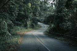 Mountain forests, roads with dense pine forests in the mountains in Chiang Rai, Thailand, where nature is the most.