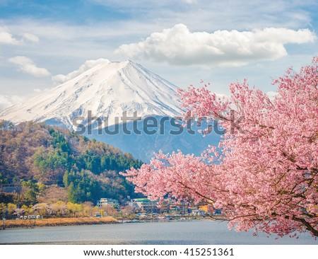 Mountain Fuji in spring at Kawaguchiko, japan. Cherry blossom Sakura. Beautiful sakura in japan. Mount Fuji is a famous Japanese. Highest mountain in Japan. Most beautiful mountain in Japan.