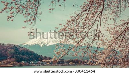 mountain fuji in spring  cherry ...