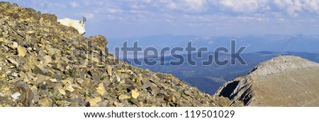 Mountain Goat on a Ridge