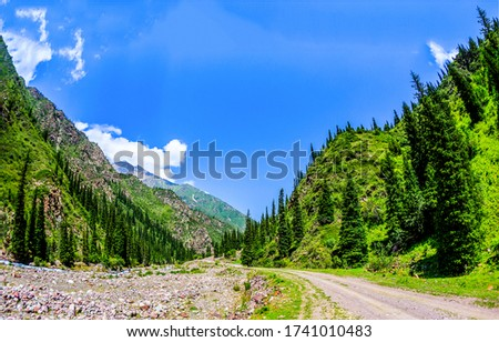 Mountain green forest road landscape. Mountain canyon road view