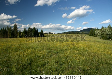 Mountain green meadow with wood and forest
