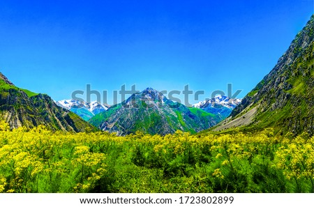 Mountain green valley flowers landscape