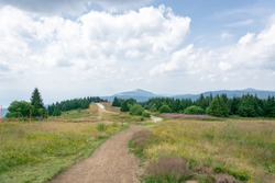 Mountain hiking lanes curving between grass shrubs, flower beds,green bushes and pine trees with view on high distant mountain top and cloudy sky landscape