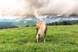 Mountain Horse and mountain landscape, alpine land, dolomites of trentino alto adige