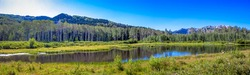 mountain lake with ducks surrounded by aspen trees and lushes, green grass