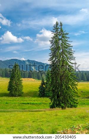 mountain landscape in Poiana Brasov , Romania #205450405