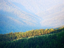 Mountain landscape rays of the sun illuminate trees spruce on the slope of the ridge