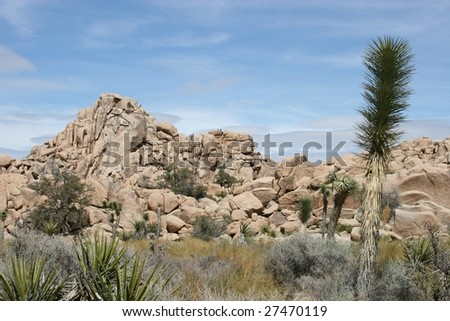 Mountain landscape with cactus