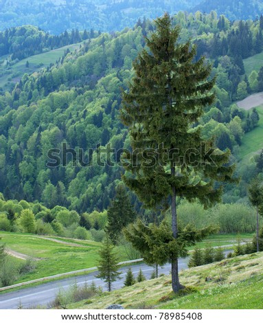 Mountain landscape with fir tree forest