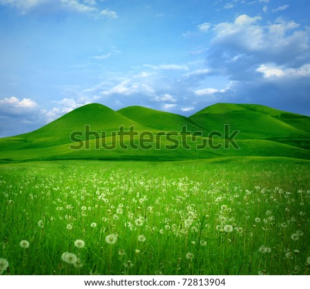Mountain landscape with flowers field