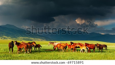 Mountain landscape with grazing horses and storm clouds