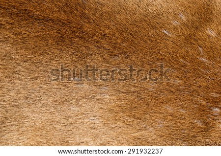 mountain lion fur background texture image