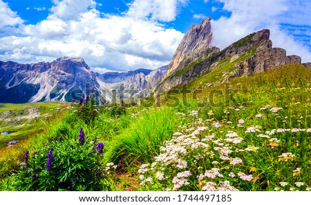 Mountain meadow flowers landscape view