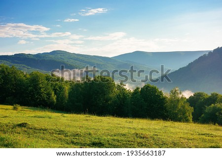 mountain meadow in morning light. countryside springtime landscape with valley in fog behind the forest on the grassy hill. fluffy clouds on a bright blue sky. nature freshness concept