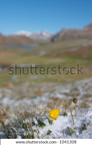 Mountain meadow in the morning after heavy snow 2