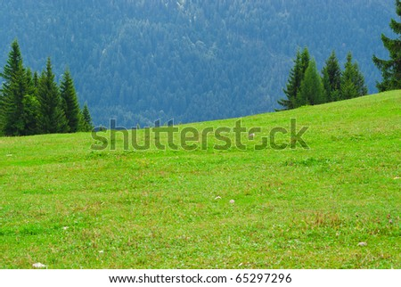 mountain meadow with a mountain of sfodno and trees, lush green and well cut and  luxuriant
