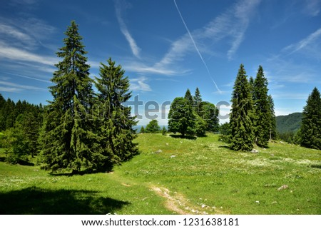 Mountain Nature and Blue Sky , Mountain Forest and Green Meadow #1231638181