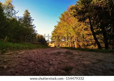 Mountain path taken at ground level with evergreen trees and seasonal trees with blue sky and shady areas.